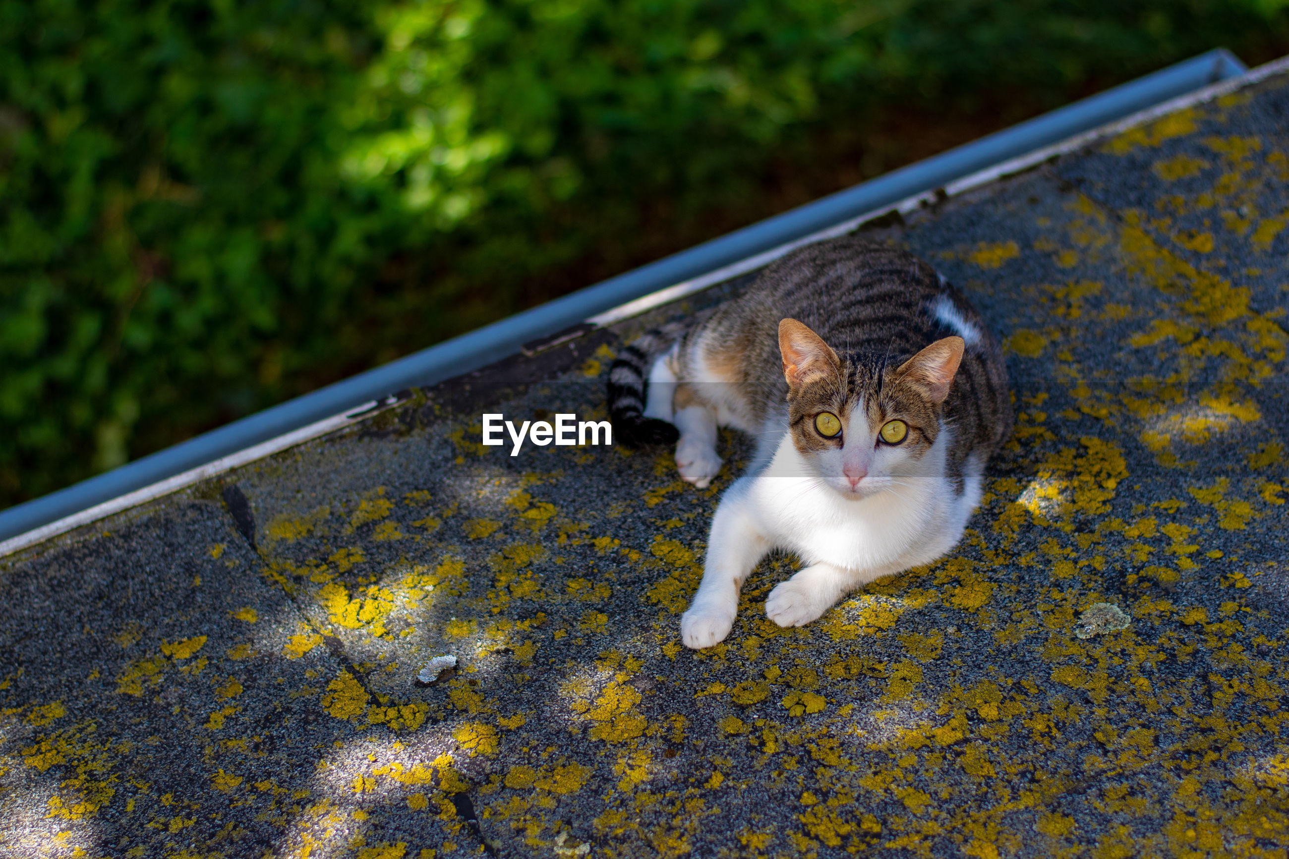 HIGH ANGLE VIEW PORTRAIT OF CAT BY YELLOW OUTDOORS