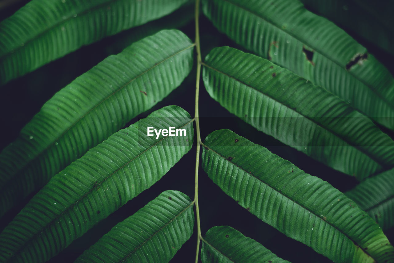 green color, leaf, plant part, no people, plant, close-up, growth, nature, beauty in nature, full frame, pattern, day, natural pattern, outdoors, leaf vein, leaves, backgrounds, focus on foreground, freshness, botany, palm leaf