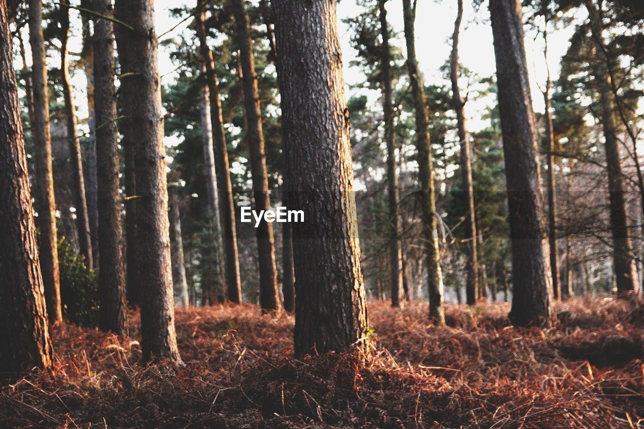 forest, tree, tree trunk, nature, no people, tranquility, woodland, tranquil scene, day, landscape, scenics, outdoors, beauty in nature, growth, wilderness area