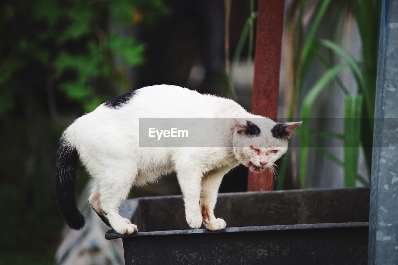Close-Up Of Cat Standing Outdoors