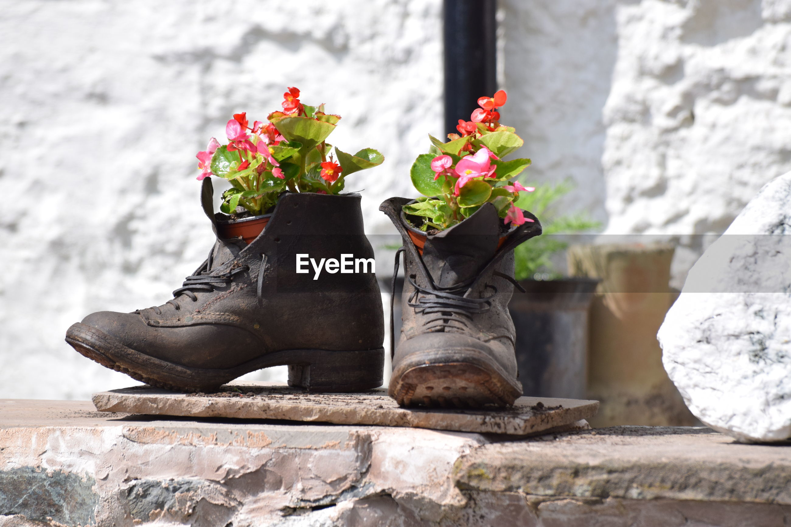 Flowers in shoes on retaining wall
