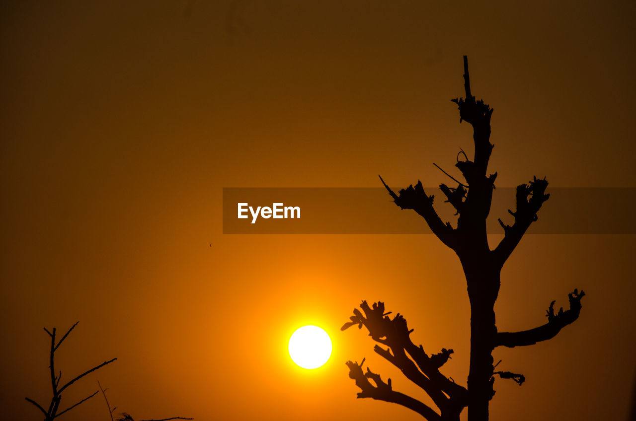 sunset, silhouette, orange color, sun, nature, tree, beauty in nature, no people, low angle view, outdoors, branch, scenics, sky