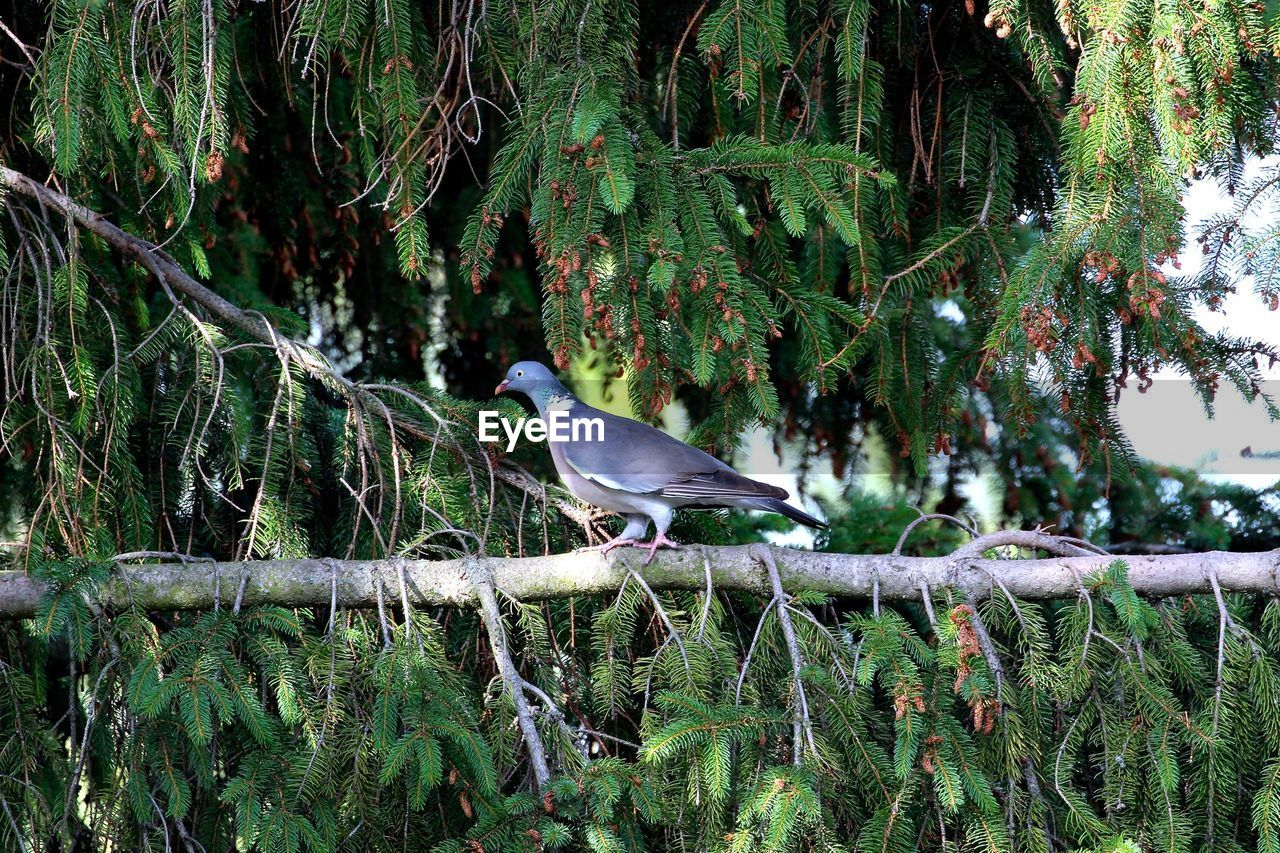 Side View Of A Bird On Branch Against Trees