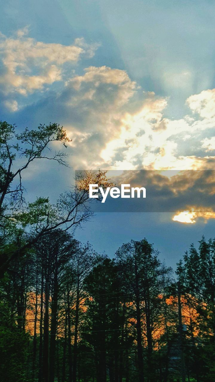 tree, sky, cloud - sky, plant, beauty in nature, tranquility, tranquil scene, scenics - nature, no people, nature, sunset, growth, land, non-urban scene, forest, silhouette, low angle view, idyllic, outdoors, landscape, woodland, coniferous tree