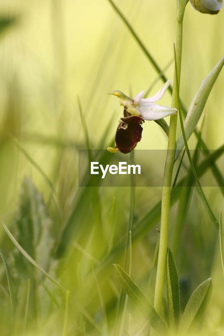 plant, growth, beauty in nature, flowering plant, flower, invertebrate, close-up, fragility, selective focus, animal wildlife, freshness, green color, insect, nature, animals in the wild, vulnerability, animal, animal themes, no people, one animal, flower head, outdoors, pollination, blade of grass