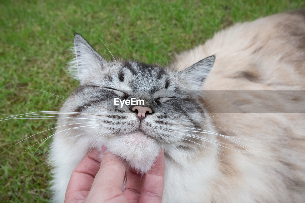 Cropped Hand Of Person Petting Cat On Grass Field