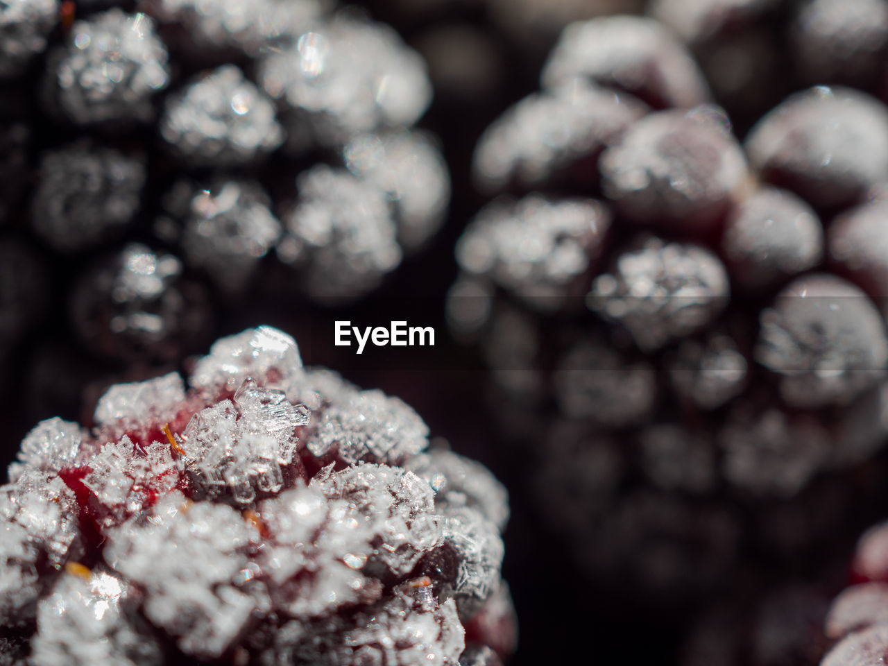 close-up, selective focus, food and drink, food, no people, berry fruit, freshness, full frame, healthy eating, wellbeing, still life, abundance, backgrounds, fruit, day, growth, nature, sweet food, cold temperature, frozen, temptation