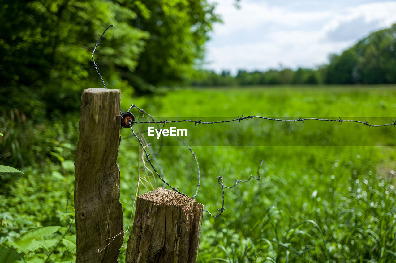 wood - material, focus on foreground, green color, plant, fence, tree, boundary, barrier, protection, nature, barbed wire, security, day, land, post, safety, wooden post, animals in the wild, wire, no people, outdoors, bark