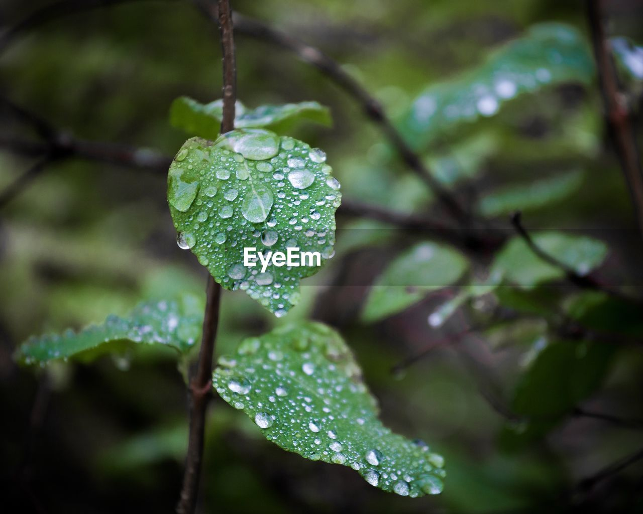 drop, water, wet, leaf, green color, nature, raindrop, growth, beauty in nature, close-up, freshness, day, outdoors, no people, fragility