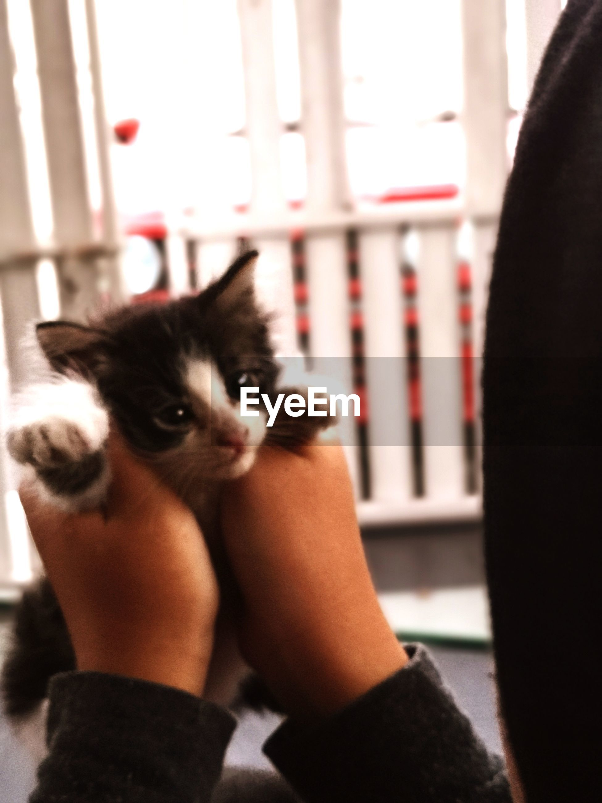 Cropped hands holding kitten at home