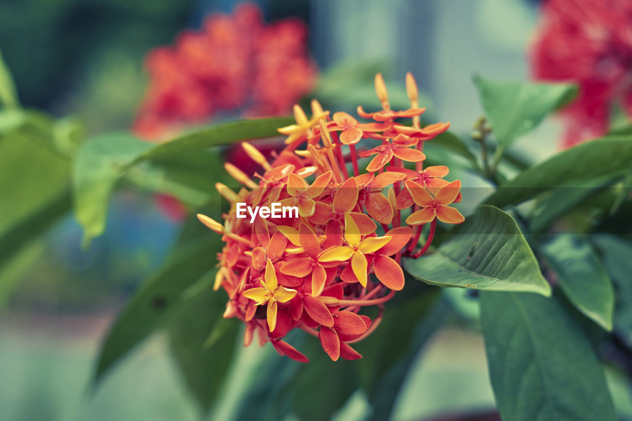 beauty in nature, flower, flowering plant, petal, vulnerability, growth, plant, freshness, fragility, flower head, inflorescence, close-up, plant part, leaf, nature, no people, focus on foreground, green color, day, red, outdoors