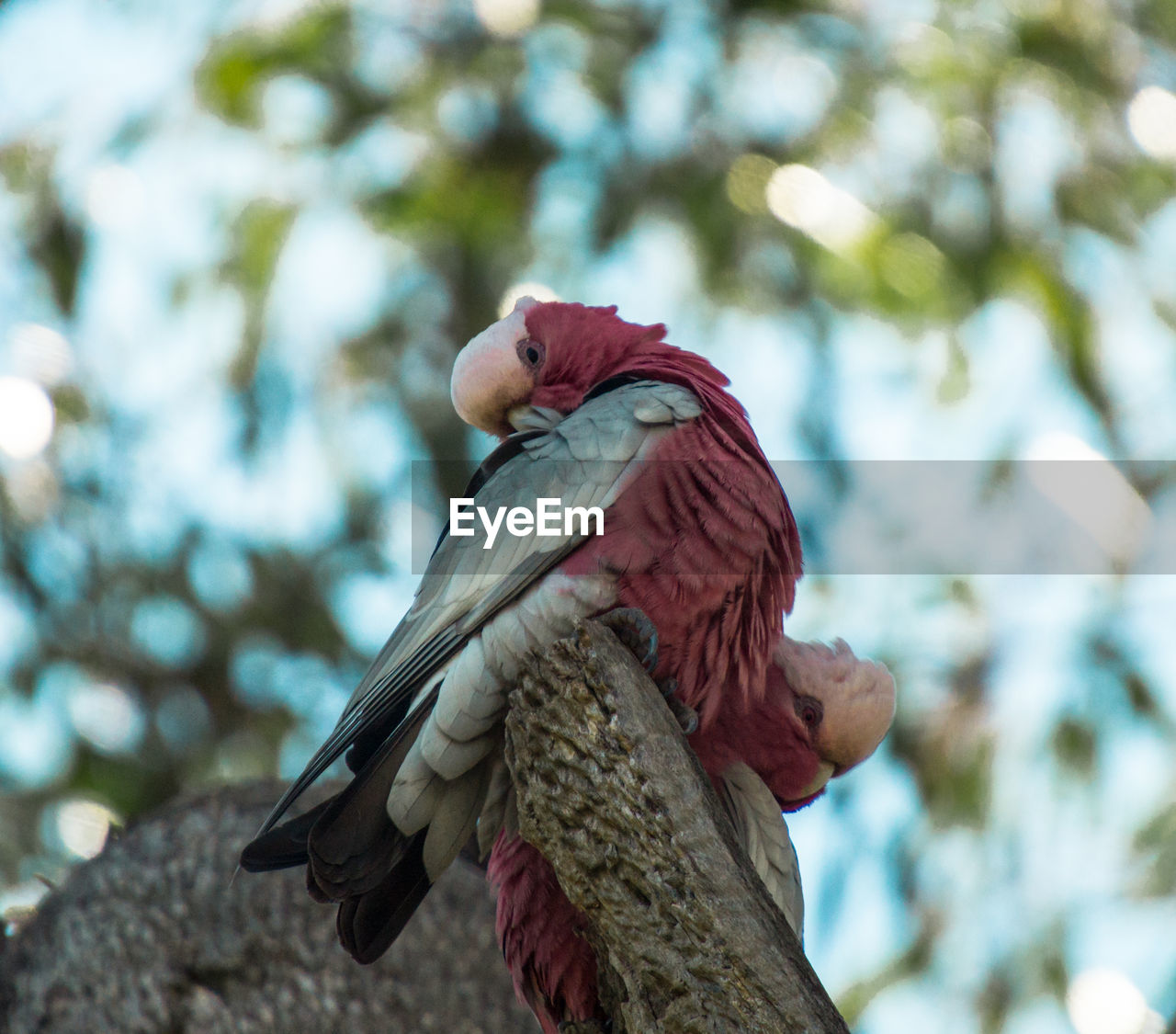 bird, one animal, focus on foreground, animals in the wild, animal themes, parrot, animal wildlife, macaw, scarlet macaw, day, perching, nature, low angle view, outdoors, no people, beauty in nature, tree, close-up