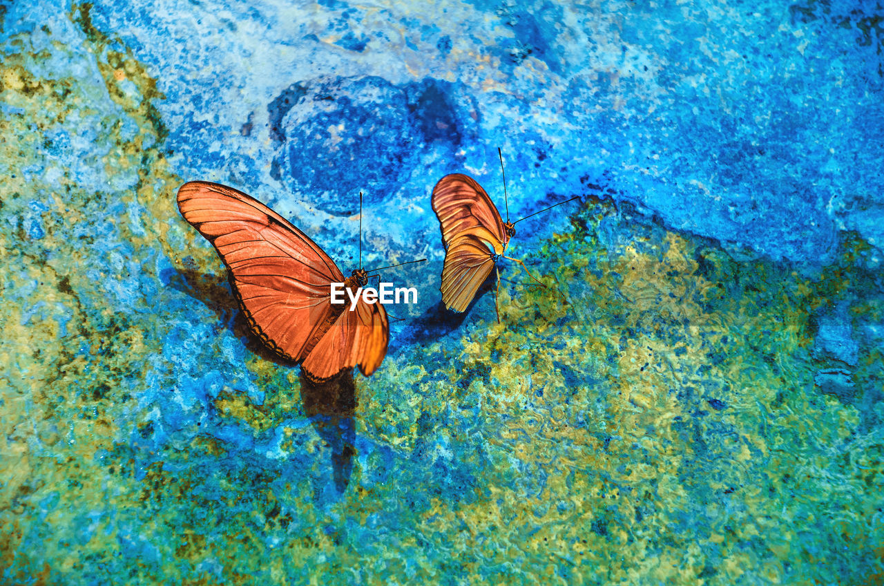 invertebrate, animal, animal wildlife, animal themes, animal wing, insect, animals in the wild, butterfly - insect, one animal, beauty in nature, nature, blue, day, high angle view, water, no people, close-up, outdoors, sea, marine, turquoise colored