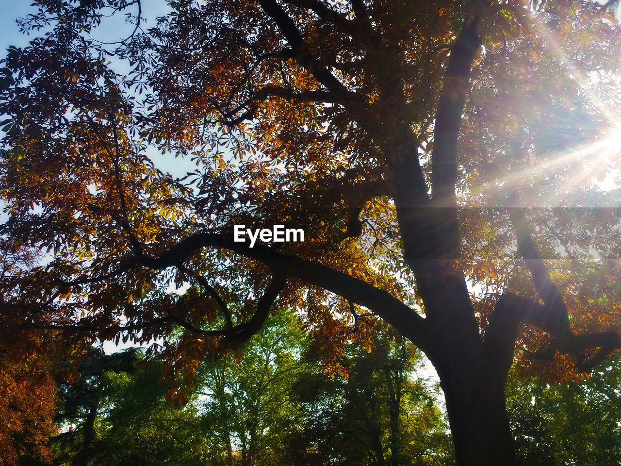 tree, low angle view, nature, growth, beauty in nature, branch, tranquility, day, tree trunk, outdoors, forest, leaf, no people, scenics, autumn, sky