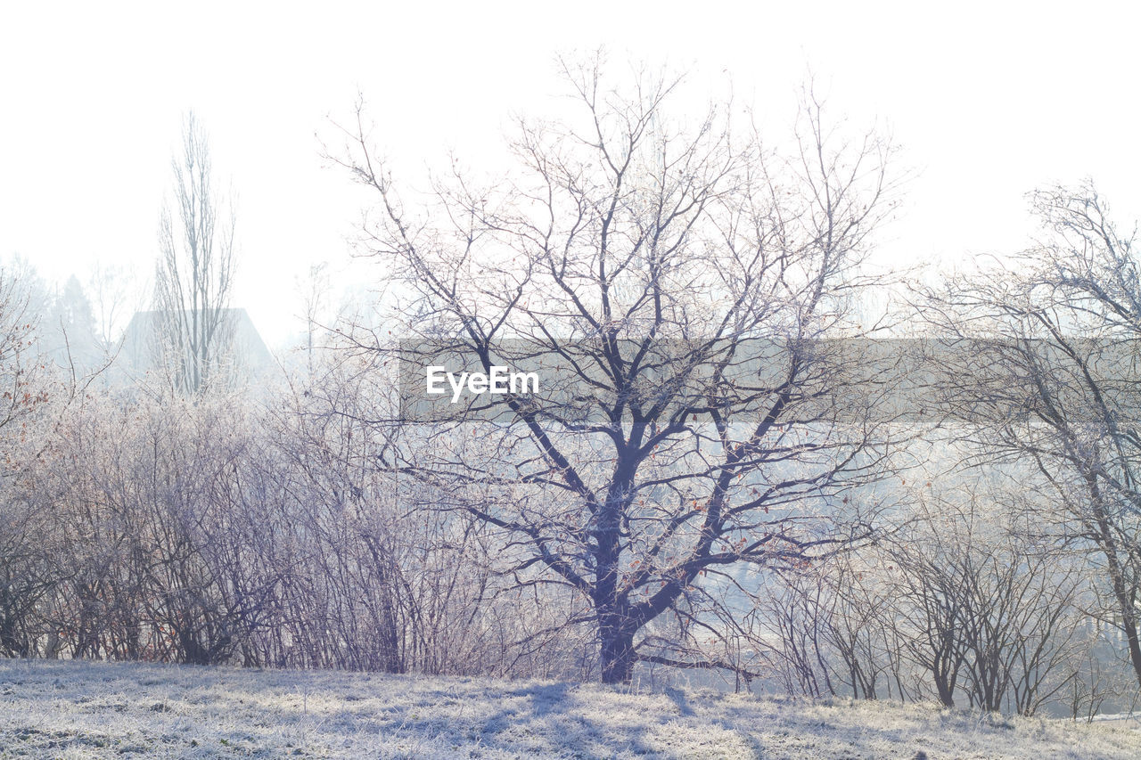winter, cold temperature, snow, bare tree, nature, tree, weather, tranquility, outdoors, day, no people, branch, landscape, beauty in nature, scenics, bleak, sky
