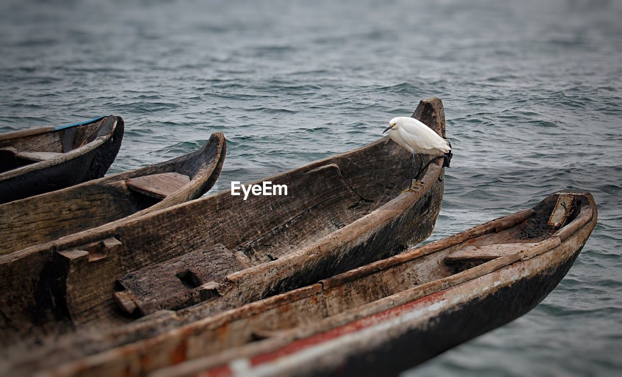 Egret Perching On Boat In Lake
