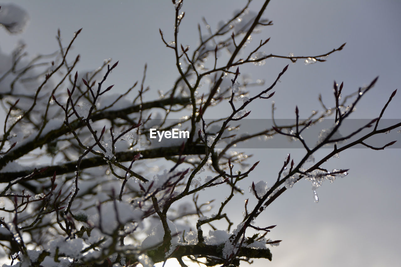 tree, plant, branch, sky, nature, no people, beauty in nature, focus on foreground, tranquility, day, bare tree, selective focus, low angle view, outdoors, growth, close-up, clear sky, cold temperature, winter