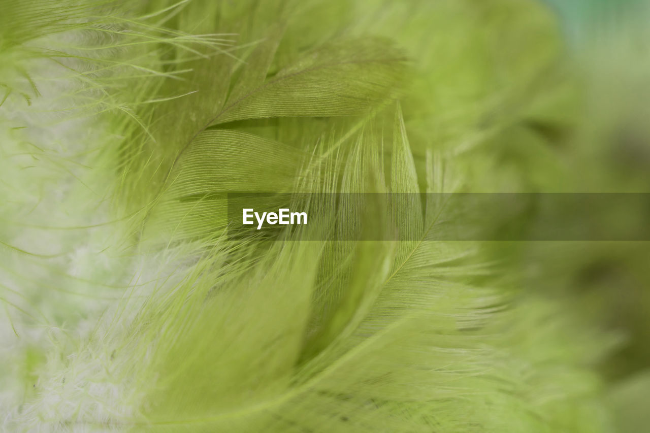 selective focus, close-up, green color, no people, softness, plant, fragility, vulnerability, growth, nature, backgrounds, full frame, beauty in nature, day, freshness, extreme close-up, still life, leaf, pattern, outdoors