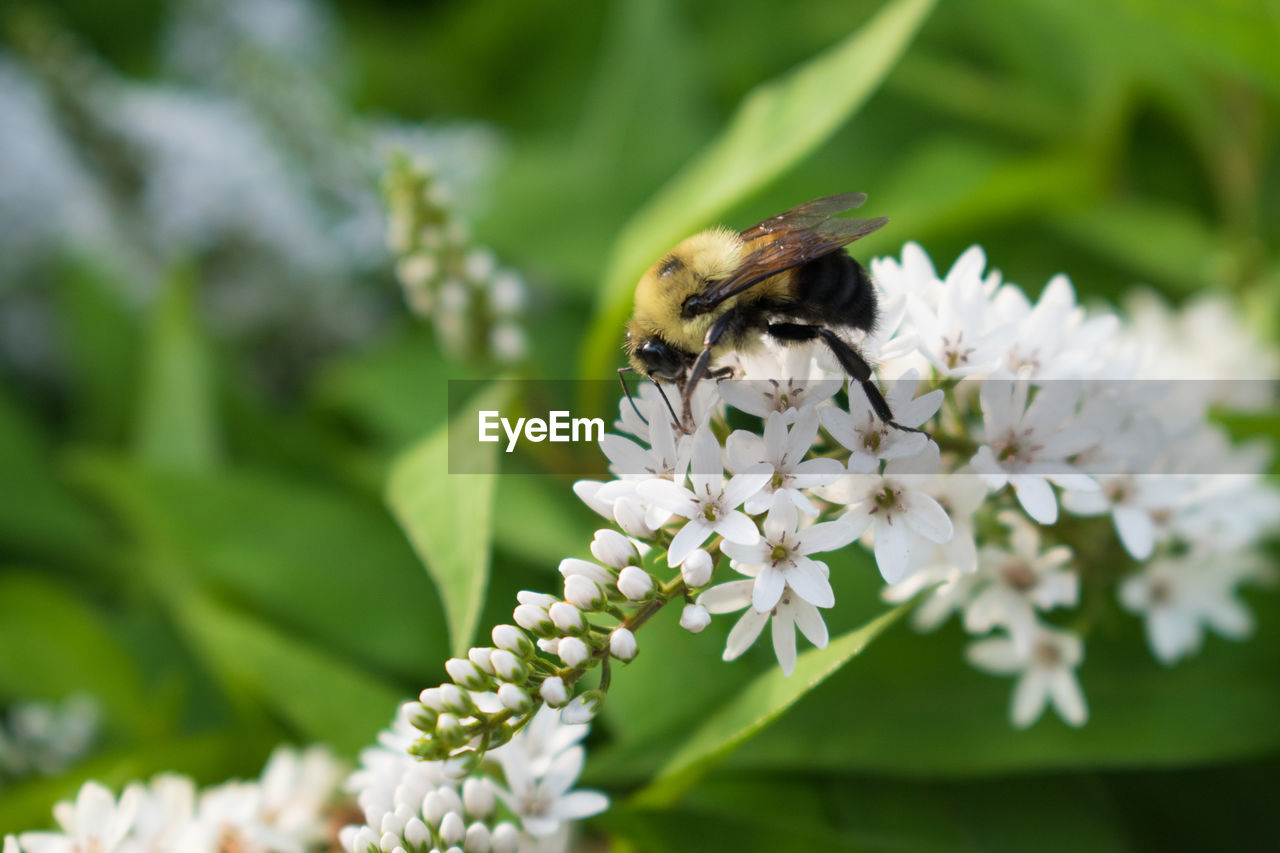 flowering plant, flower, invertebrate, plant, insect, animal themes, animals in the wild, animal wildlife, fragility, beauty in nature, one animal, animal, vulnerability, growth, freshness, petal, bee, flower head, close-up, pollination, no people, pollen