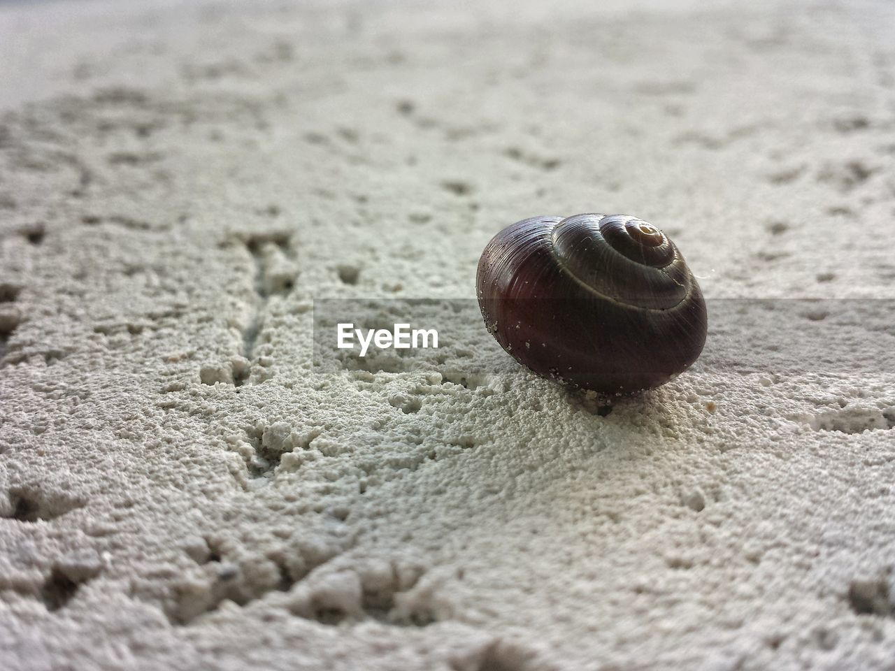 snail, one animal, gastropod, animal shell, animal themes, wildlife, sand, animals in the wild, close-up, nature, no people, day, outdoors, fragility