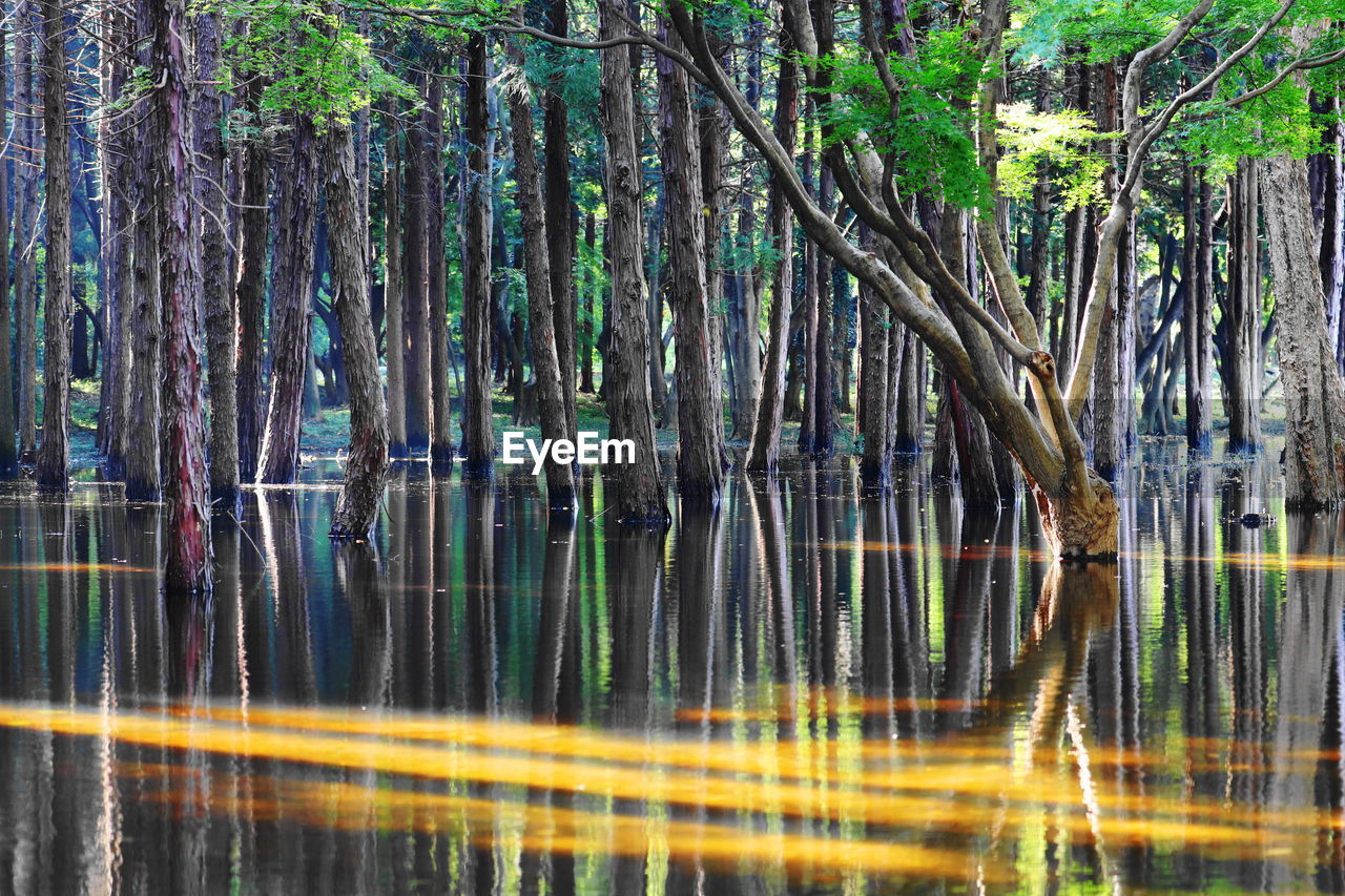 tree, reflection, nature, outdoors, forest, tranquility, growth, no people, water, tree trunk, lake, day, beauty in nature, scenics, branch