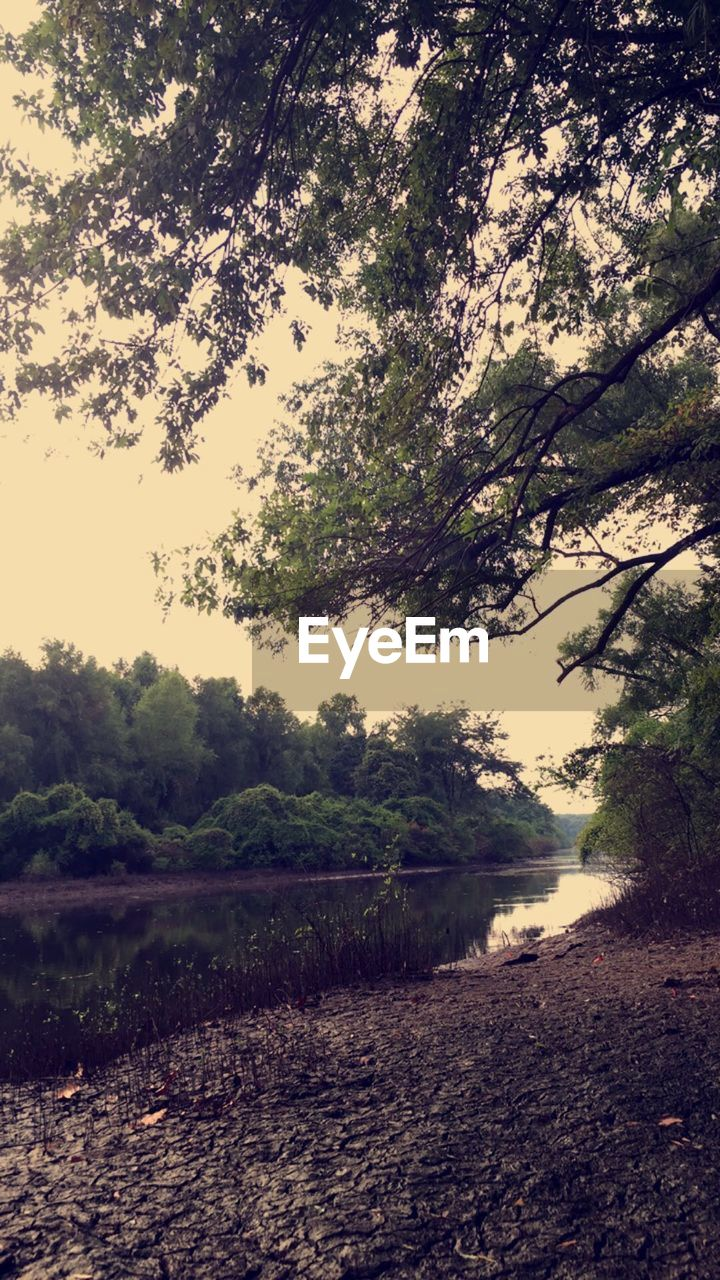 tree, nature, beauty in nature, no people, tranquility, tranquil scene, scenics, outdoors, growth, landscape, field, day, water, sky