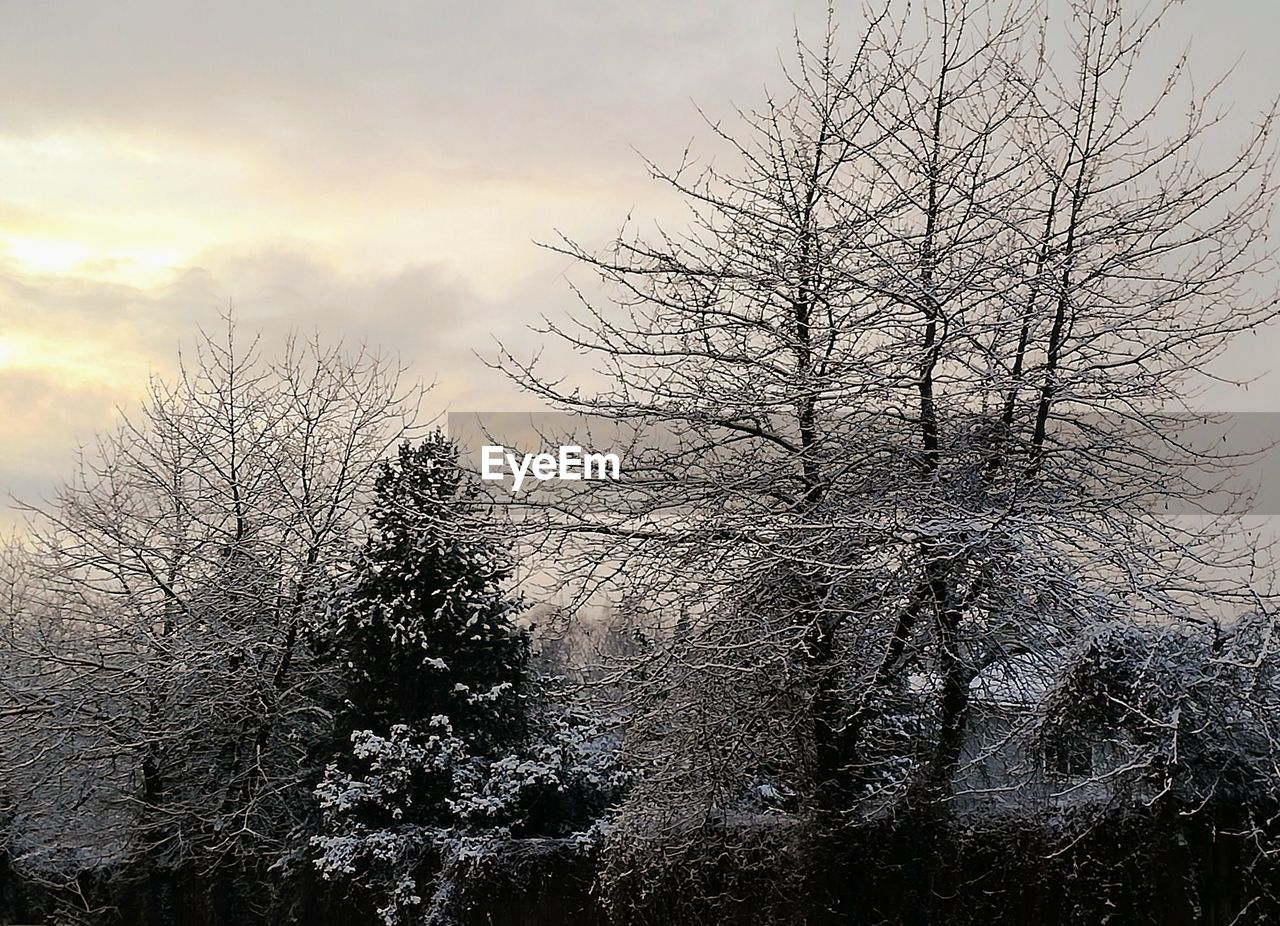 tree, plant, sky, bare tree, beauty in nature, tranquility, no people, tranquil scene, cloud - sky, branch, nature, scenics - nature, cold temperature, winter, growth, non-urban scene, day, silhouette, land, outdoors