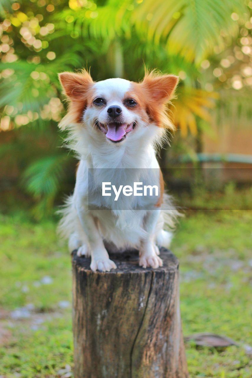 PORTRAIT OF DOG LYING ON WOOD