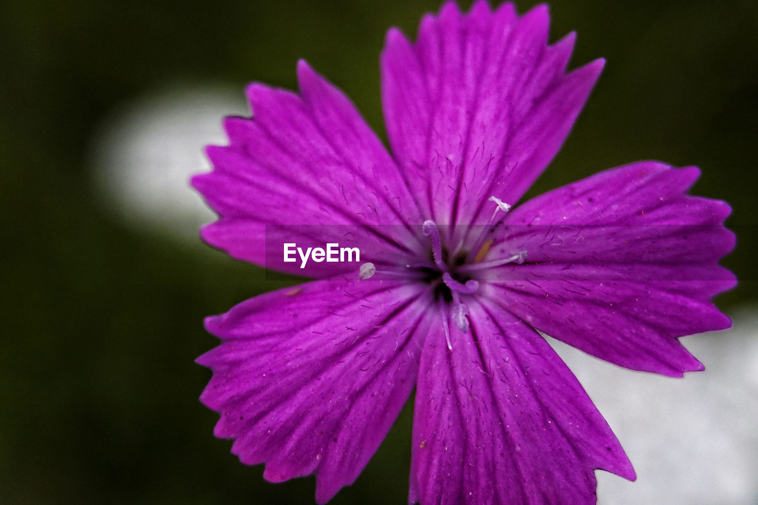 CLOSE-UP OF PINK FLOWER AND PURPLE CONEFLOWER
