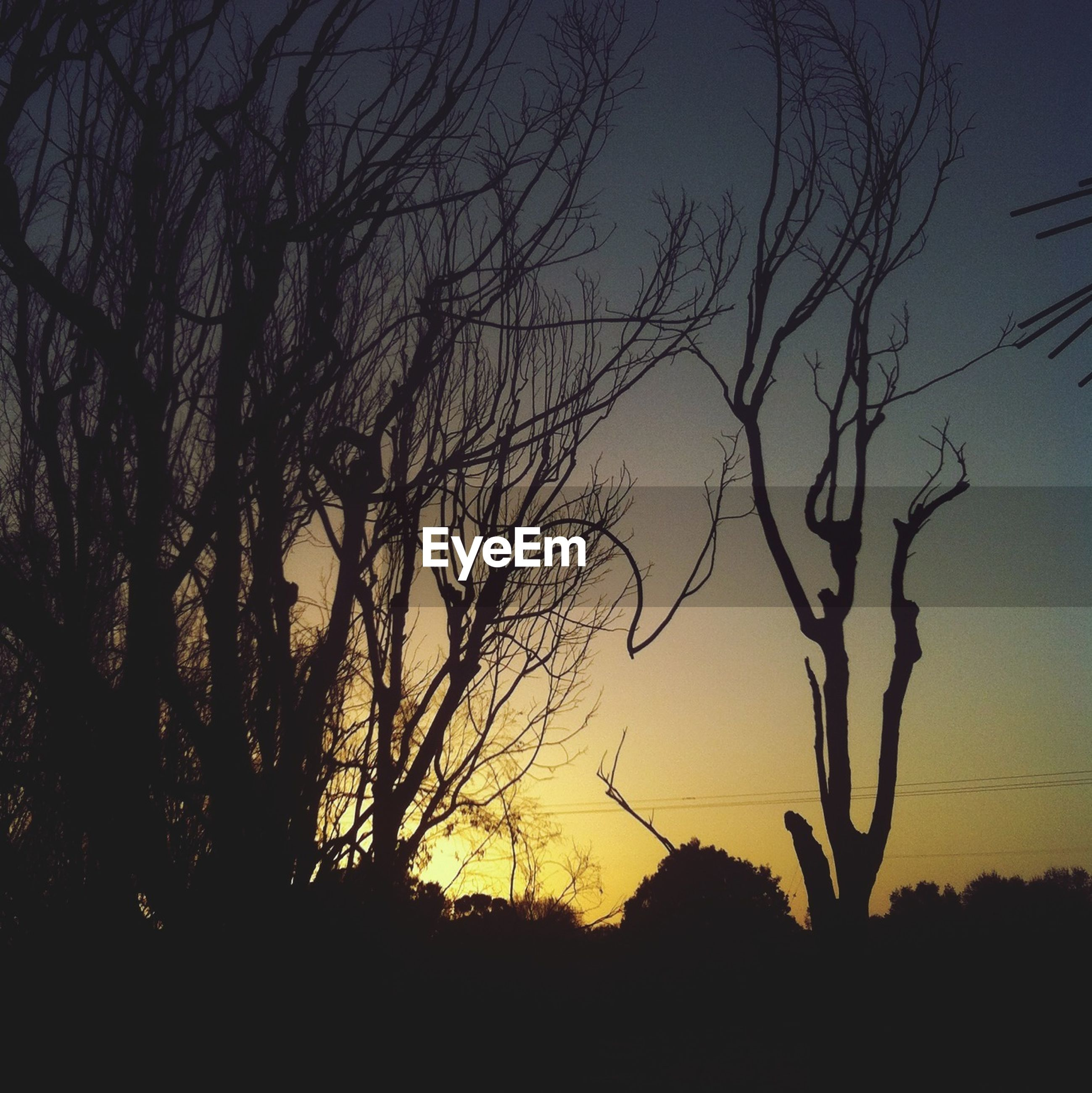 silhouette, bare tree, tree, tranquility, sunset, tranquil scene, branch, scenics, beauty in nature, nature, sky, landscape, idyllic, clear sky, dusk, non-urban scene, outdoors, low angle view, no people, dark