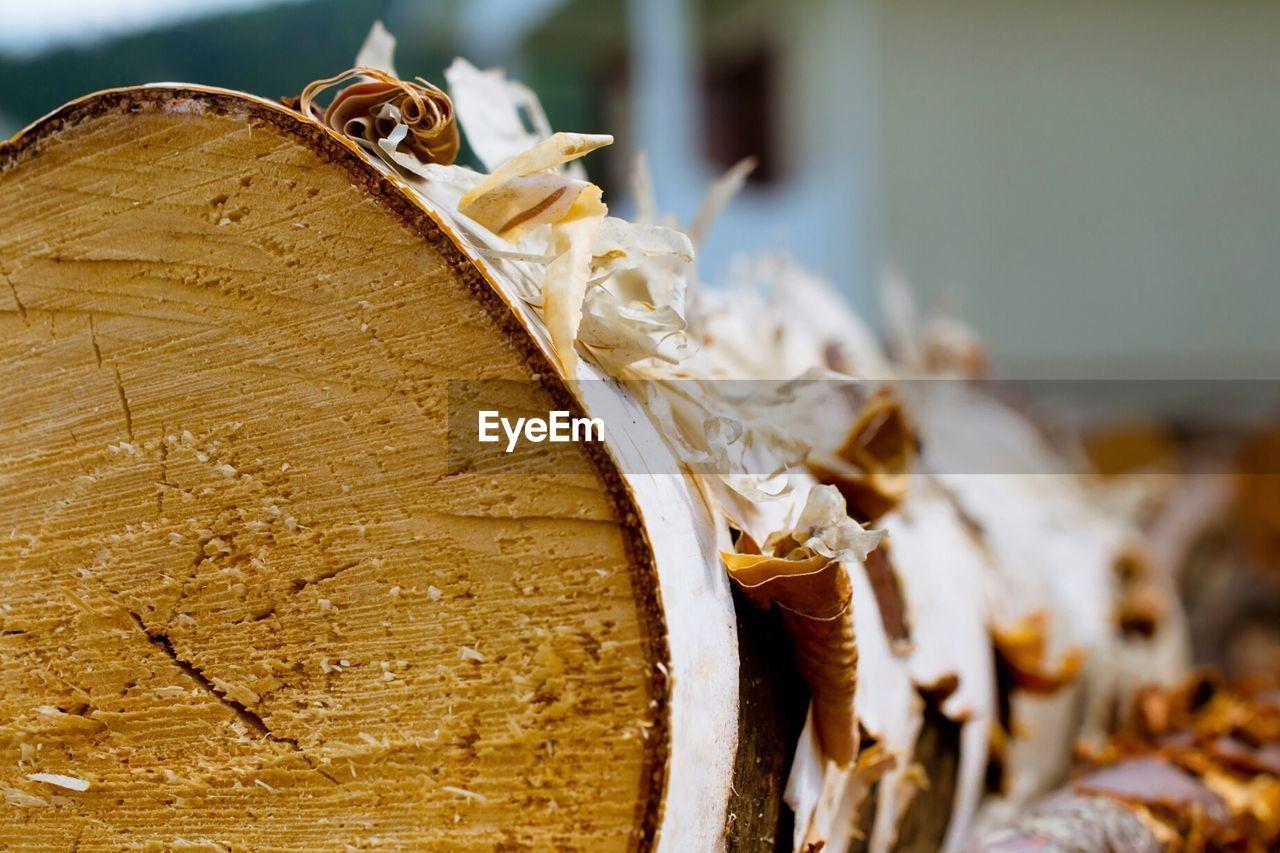 Close-Up Of Log