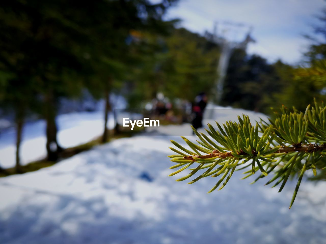 nature, tree, focus on foreground, growth, outdoors, day, green color, plant, beauty in nature, leaf, no people, winter, cold temperature, snow, sky, close-up, freshness