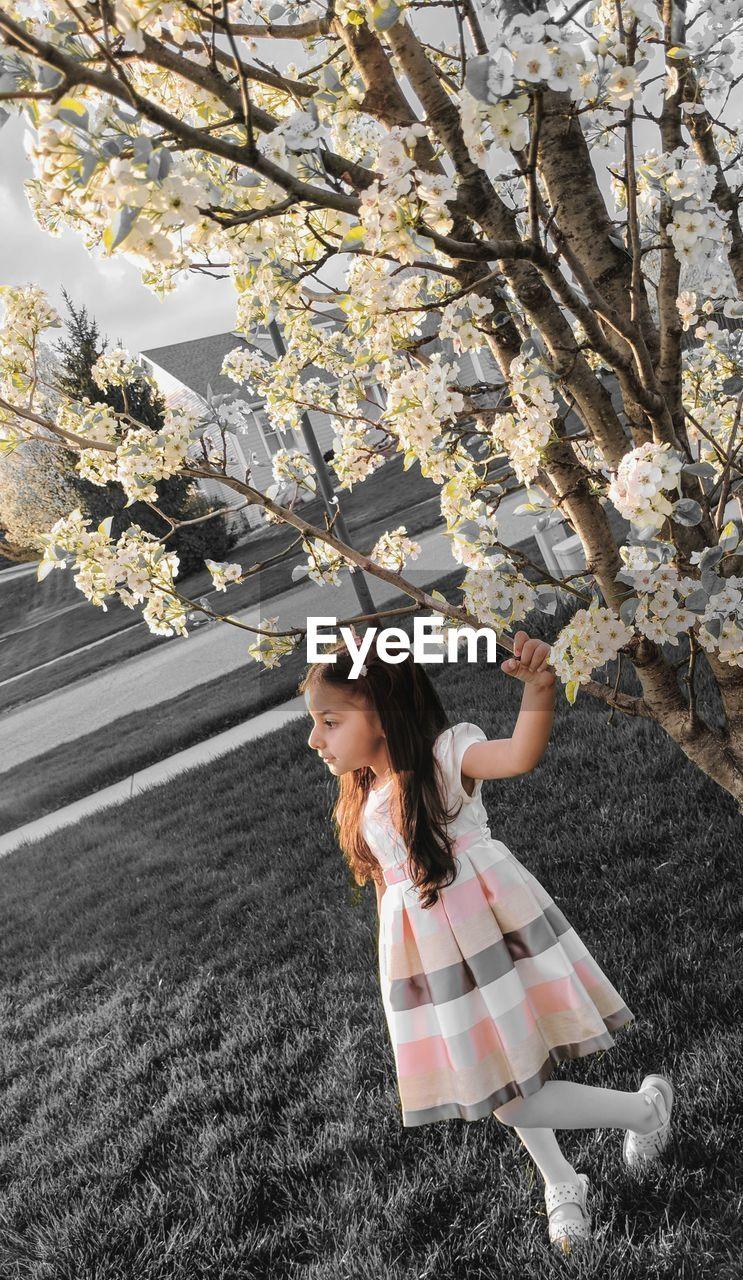 Full Length Of Girl Standing By Cherry Tree