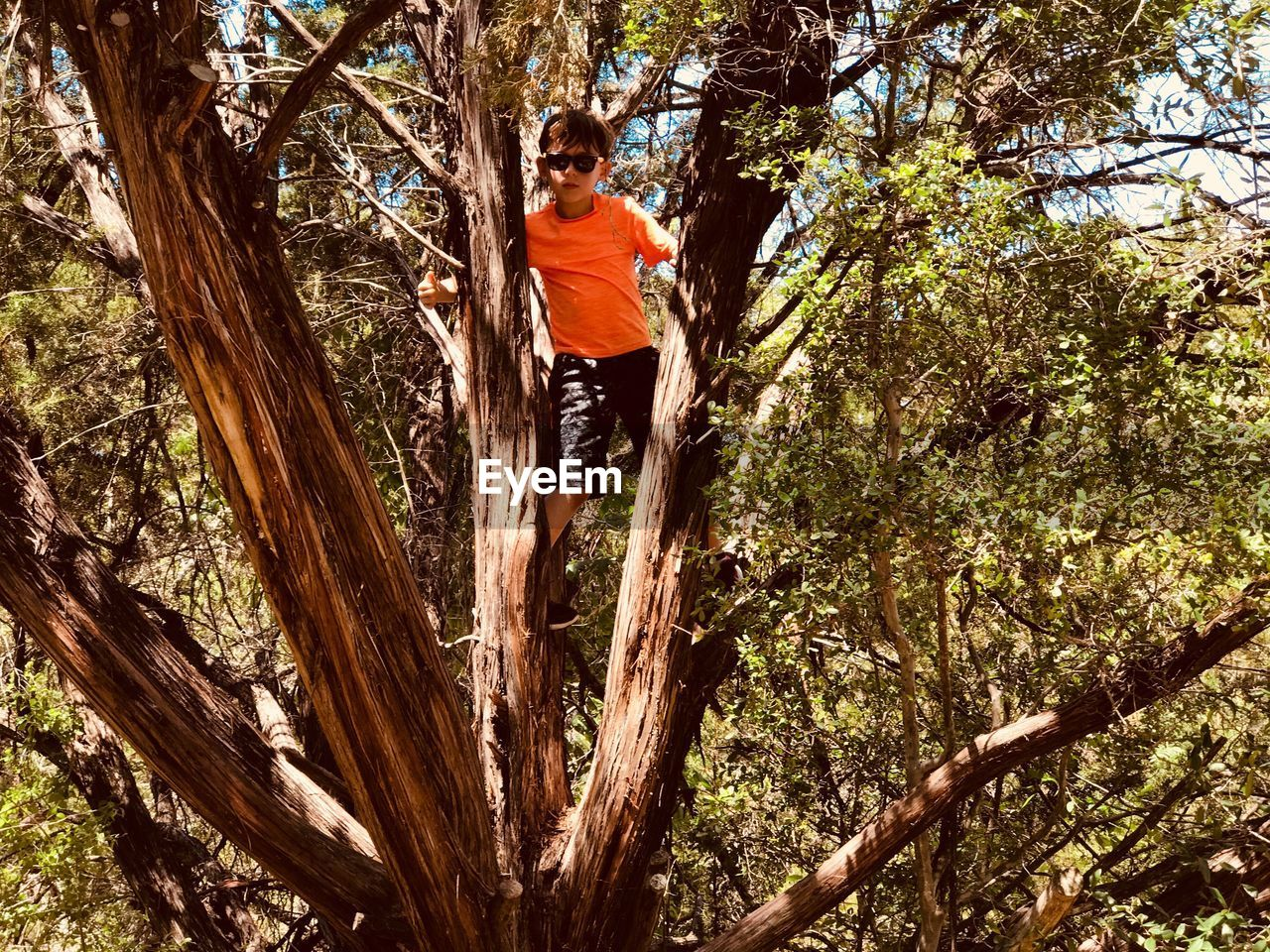 Low Angle View Of Boy Standing On Tree