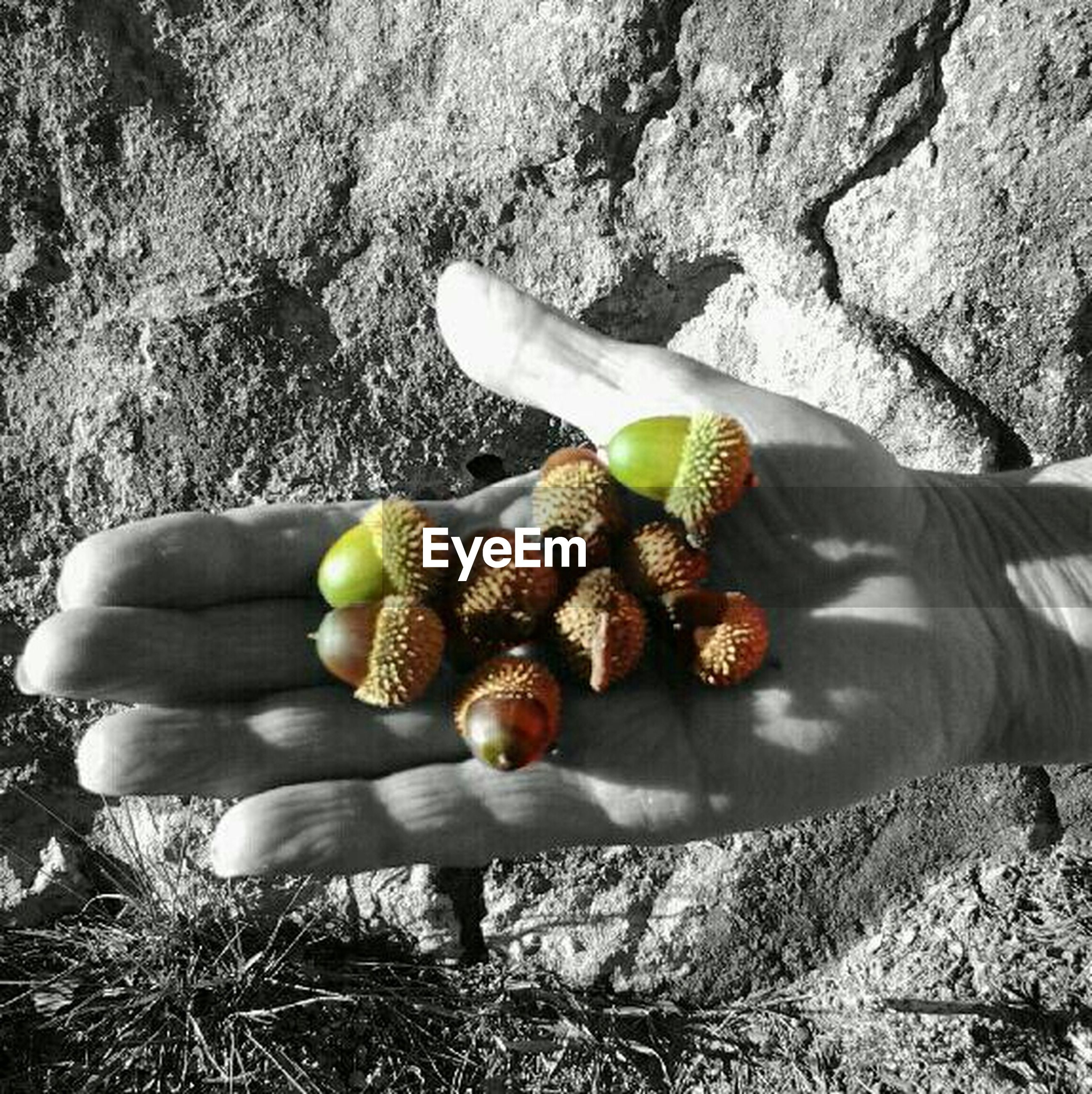 food and drink, food, healthy eating, fruit, personal perspective, high angle view, person, part of, low section, unrecognizable person, lifestyles, day, field, outdoors, holding, leisure activity