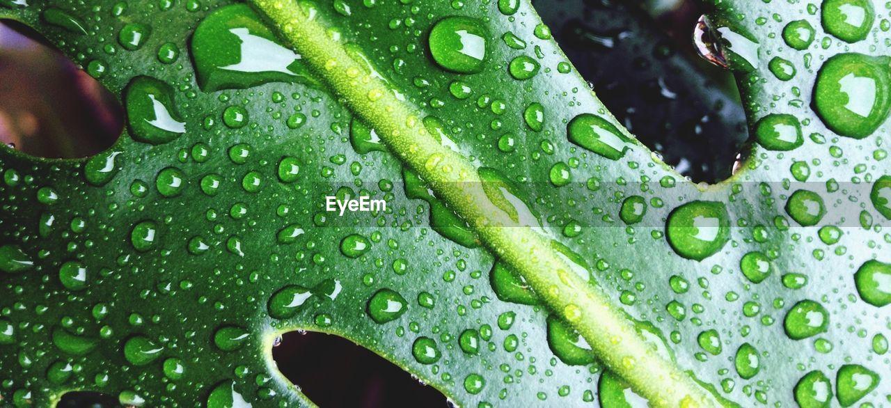 Full frame shot of wet leaf