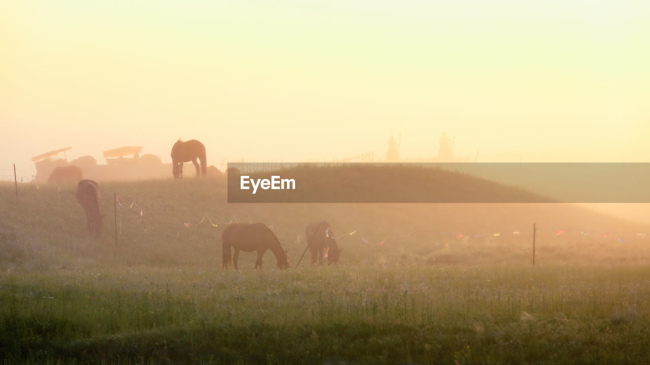 VIEW OF HORSES GRAZING IN FIELD