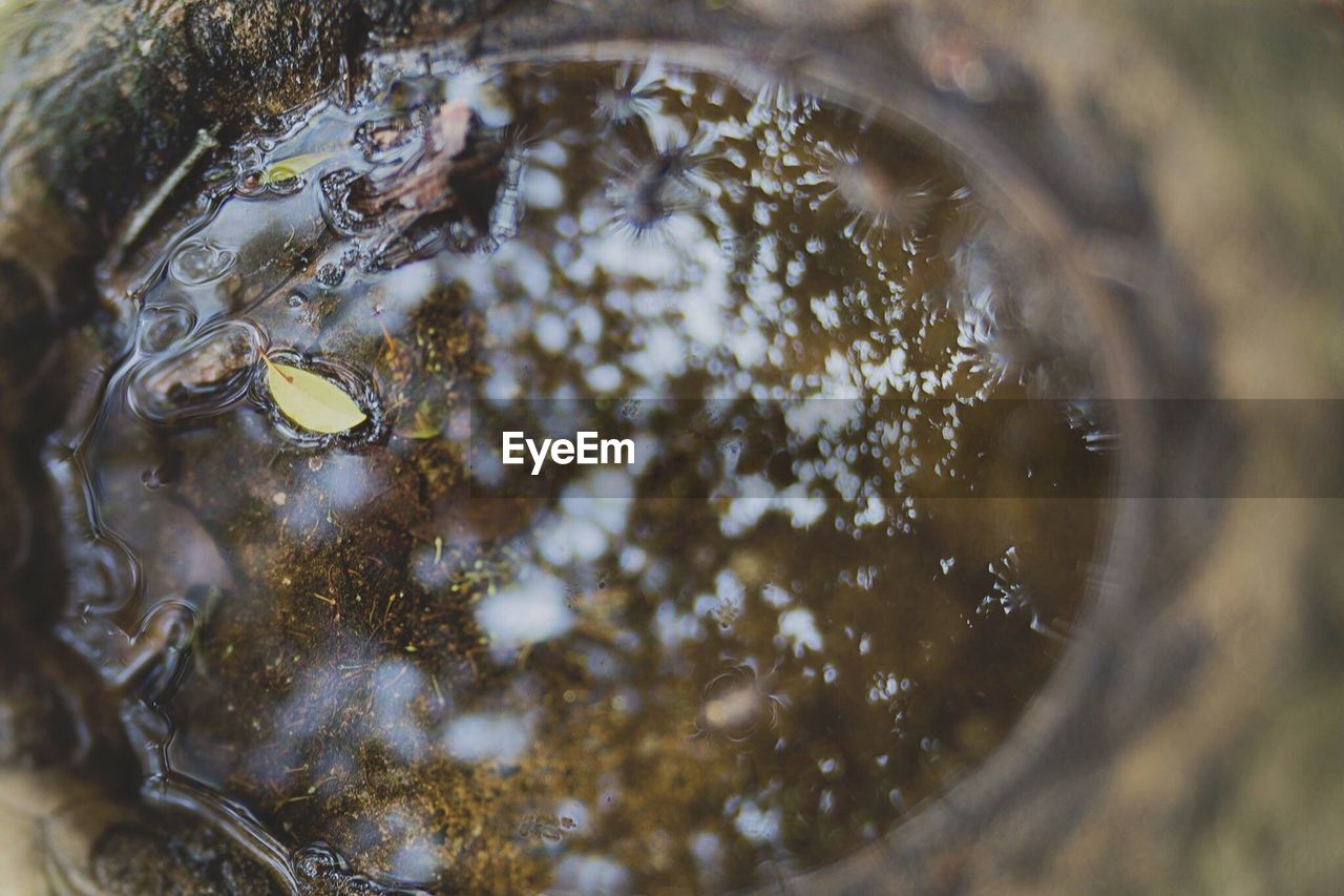 water, no people, close-up, nature, day, outdoors, animal themes, beauty in nature