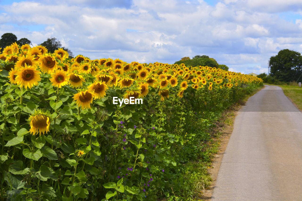 View Of Flowers Growing In Field Against Sky
