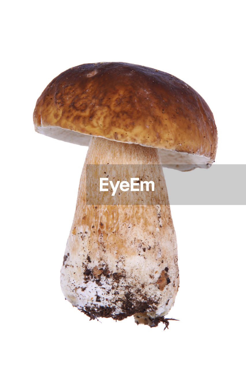 Close-up of mushroom over white background