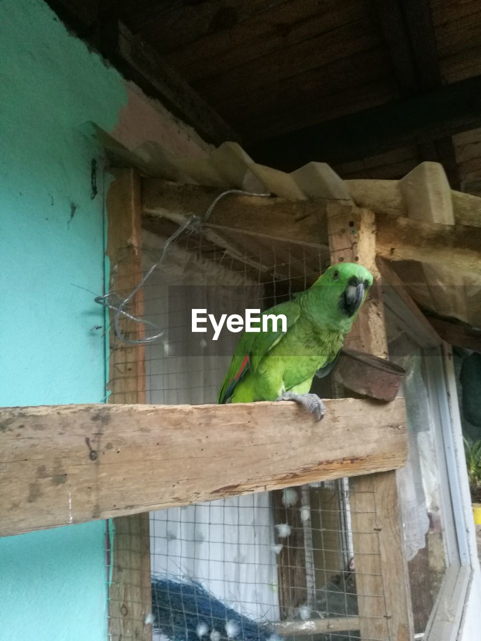 one animal, animal themes, perching, animals in the wild, bird, wood - material, parrot, animal wildlife, no people, indoors, day, nature, mammal, close-up