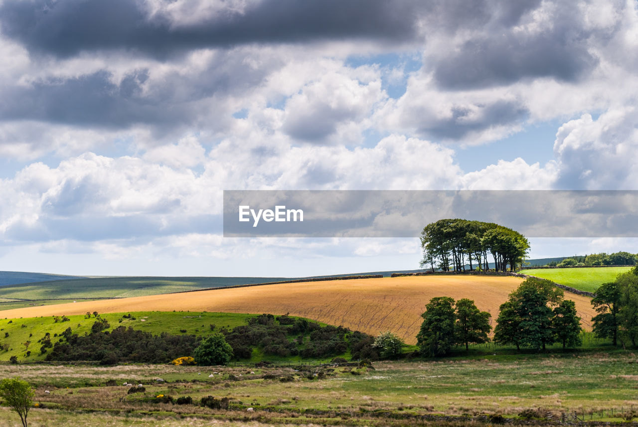 cloud - sky, sky, landscape, environment, land, scenics - nature, plant, field, tranquil scene, beauty in nature, nature, tranquility, day, tree, no people, rural scene, non-urban scene, growth, agriculture, grass, outdoors