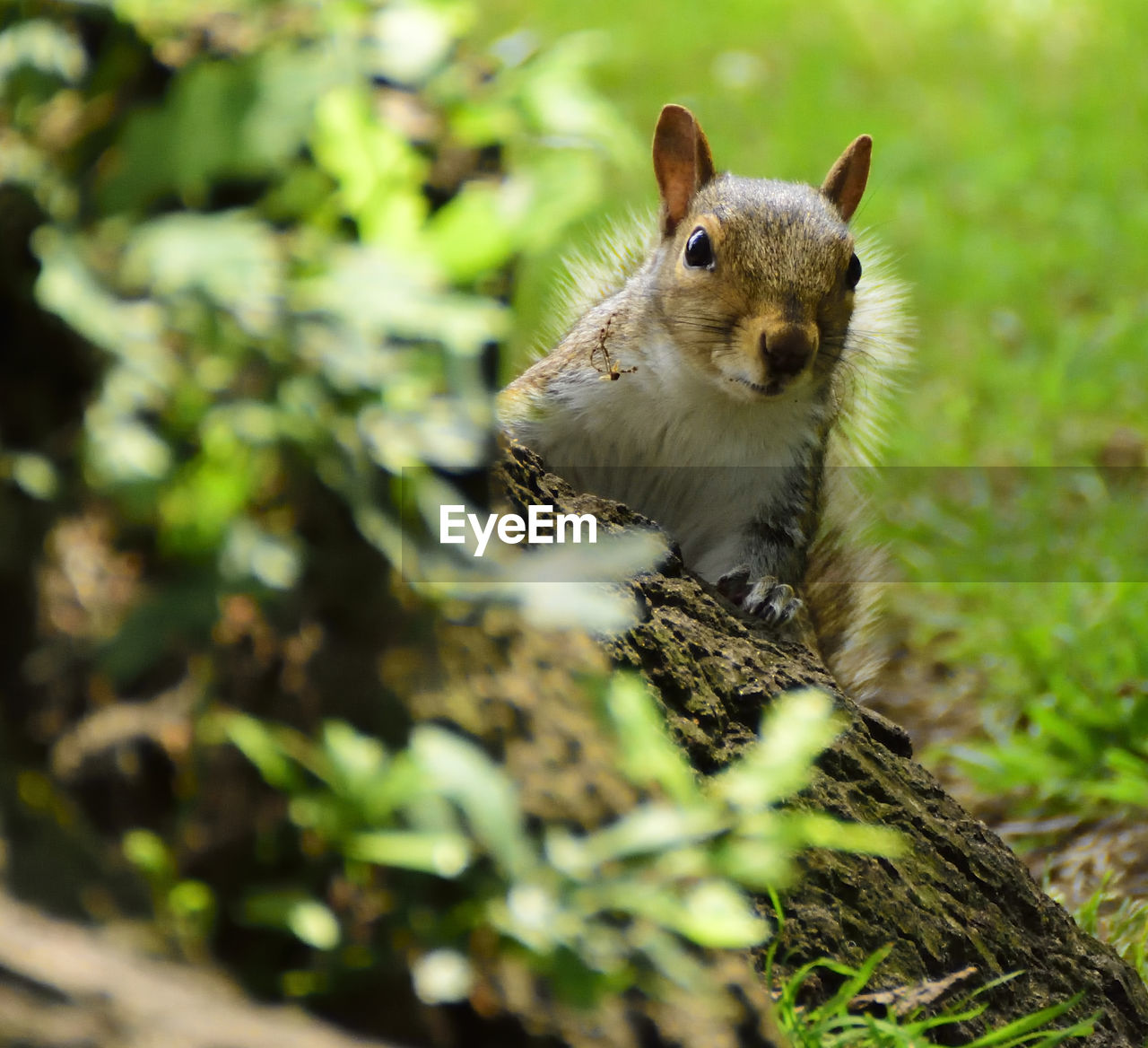 animal, animal themes, one animal, mammal, animal wildlife, rodent, animals in the wild, vertebrate, selective focus, no people, day, plant, nature, squirrel, looking at camera, close-up, land, portrait, tree, field, outdoors, animal head, whisker