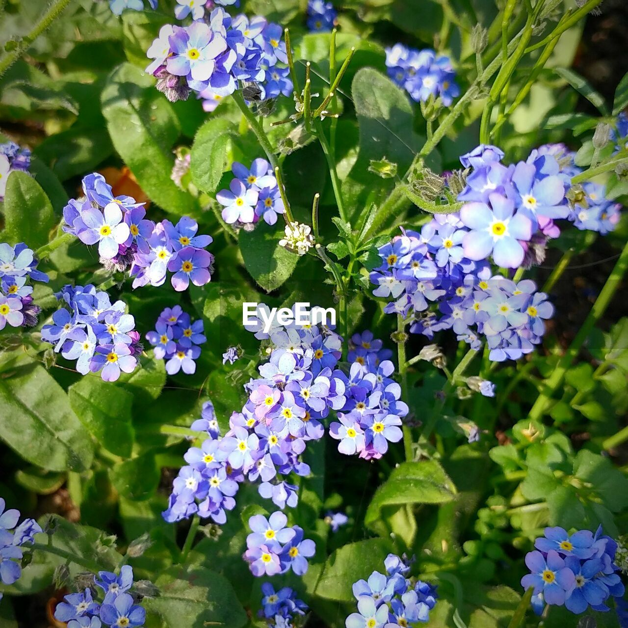 flower, beauty in nature, fragility, growth, purple, nature, plant, day, petal, green color, outdoors, flower head, freshness, no people, hydrangea, blooming, close-up