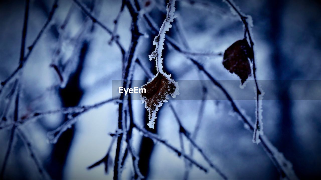 cold temperature, plant, winter, beauty in nature, snow, frozen, nature, focus on foreground, close-up, no people, branch, frost, ice, tree, day, twig, tranquility, outdoors, dry, dead plant