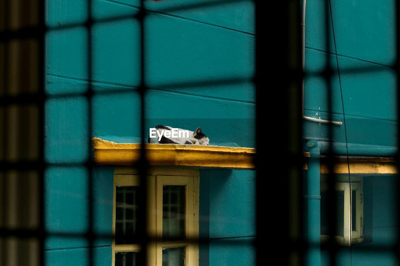 Cat Sleeping On Ledge Of Turquoise Painted Building Seen Through Window