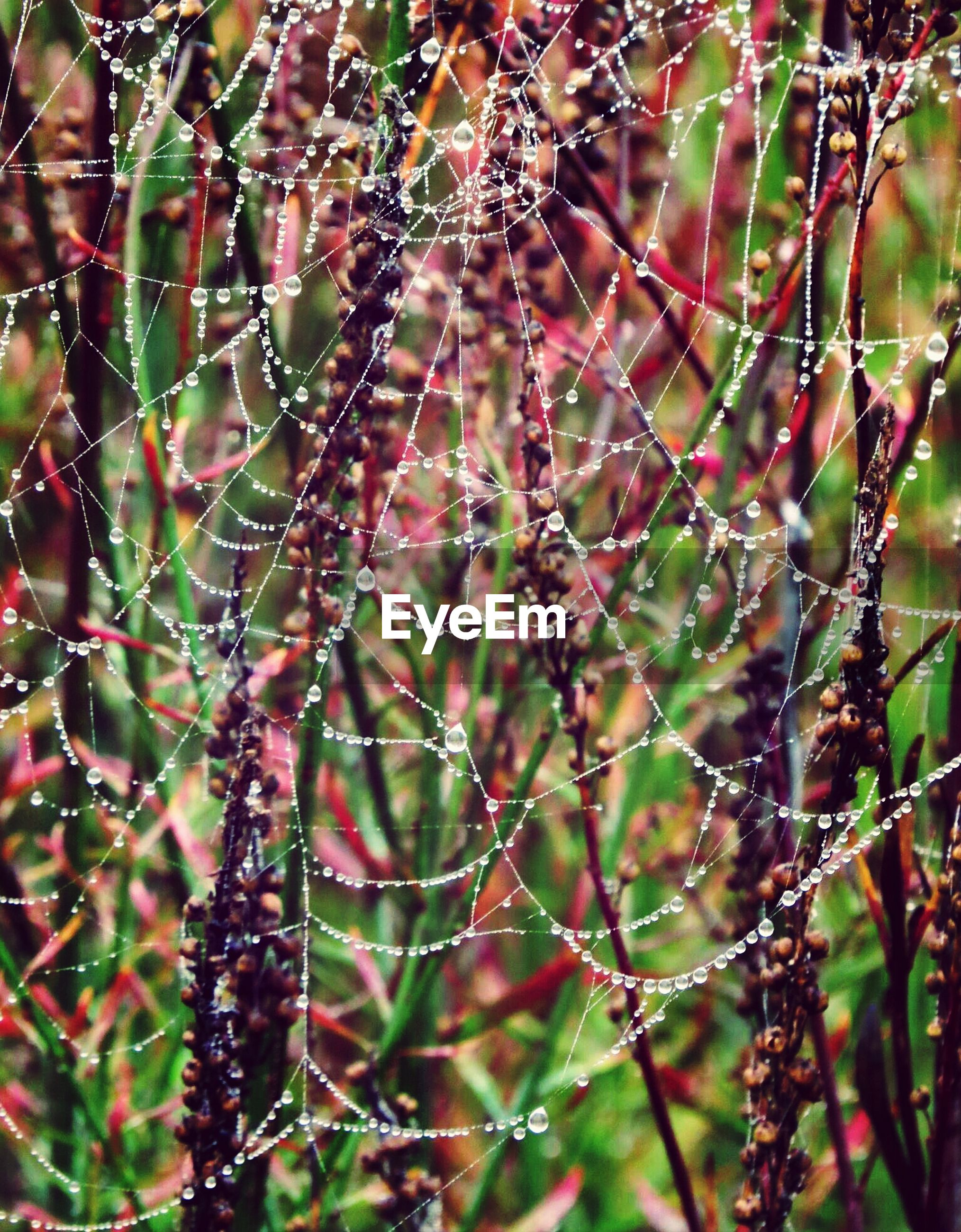 focus on foreground, close-up, growth, plant, branch, spider web, nature, twig, beauty in nature, tree, selective focus, day, outdoors, fragility, freshness, leaf, natural pattern, forest, no people, tranquility