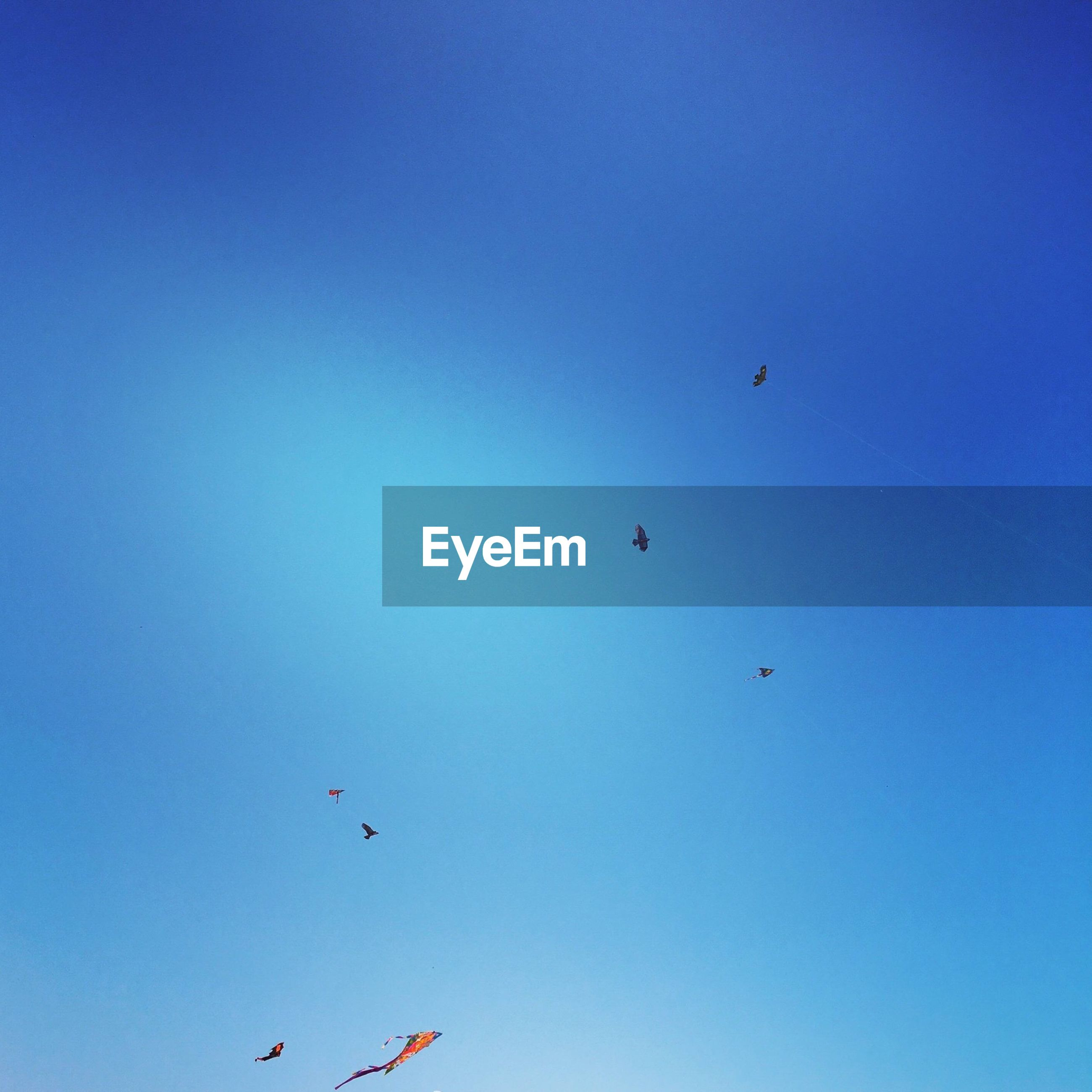 flying, low angle view, bird, animal themes, animals in the wild, clear sky, mid-air, blue, wildlife, copy space, flock of birds, spread wings, nature, sky, day, freedom, outdoors, medium group of animals, beauty in nature