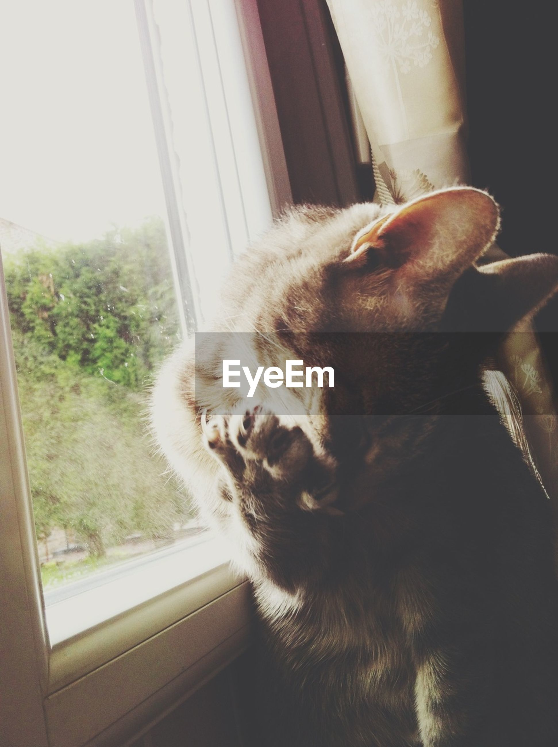 pets, one animal, domestic animals, domestic cat, mammal, indoors, cat, animal themes, window, feline, looking through window, relaxation, whisker, looking away, home interior, glass - material, transparent, sitting, window sill, close-up