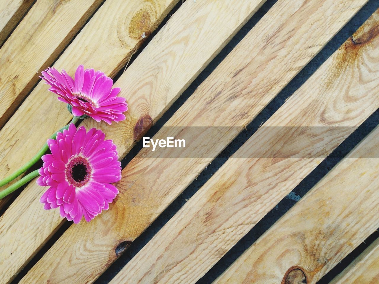 flower, flowering plant, wood - material, freshness, close-up, plant, vulnerability, fragility, pink color, petal, flower head, inflorescence, no people, beauty in nature, nature, growth, indoors, full frame, directly above, wood, purple, wood grain